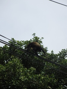 while driving, we saw a family of monkeys happily hanging out in the trees and wires.